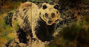 Il WWF denuncia una preoccupante situazione di stallo per l'Orso bruno marsicano