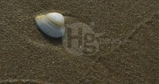 Balneabilità litorale giuliese: Buoni i risultati dei campionamenti ARTA effettuati a giugno