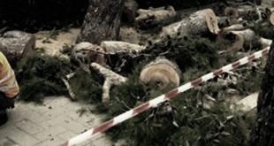 Denunciati 6 attivisti del coordinamento 'salviamo gli alberi': Il movimento #InterruzionediPubblicaDevastazione