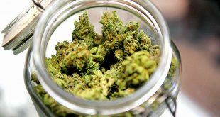 Abruzzo: arrestati 8 camorristi, temevano legalizzazione marijuana. Acerbo (PRC) 'è ora di procedere alla legalizzazione'
