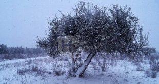 Contributi alle imprese agricole per i danni dalla nevicata del gennaio 2017