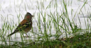 I consueti consigli del WWF Abruzzo per un inverno in armonia con la natura