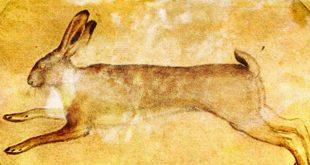 Calendario venatorio Abruzzo. Il TAR accoglie parzialmente la sospensiva richiesta dal WWF. Tregua settembrina per le lepri