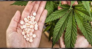 Cannabis terapeutica: Blasioli (PD) chiede la rimborsabilità dei farmaci