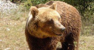 Il Parco Nazionale d'Abruzzo individua 37 strutture potenzialmente pericolose per l'Orso bruno marsicano