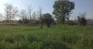 """Orti Urbani a Montesilvano, Falcone: """"Iniziano i lavori per preparare l'area"""""""
