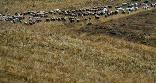 Siccità: la Regione chiede lo stato di emergenza per l'area del Vastese