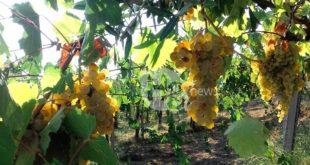 Fondi dalla Regione per la promozione dei vini sui mercati extra UE