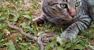"""A Cocullo multe a chi nutre i gatti randagi, gli Animalisti Italiani """"è illegale"""""""