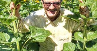 Miele: 8 premi per l'abruzzese 'L'ape e l'arnia'