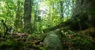 Conferenza di Italia Nostra sulle foreste abruzzesi