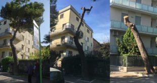 """Pescara, decapitato il pino di Viale Regina Margherita: le associazioni """"perchè?"""""""