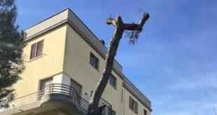 """Replica: Marchegiani su taglio dell'albero in via Regina Margherita. """"Non abbiamo tagliato noi il pino. Bastava chiedere"""""""