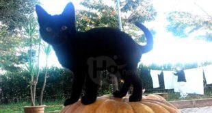 Black Cats Appreciation Day: il 17 novembre al Parco della Libertà con il Dog village. Microchip gratuiti per i felini