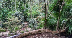 Il 1 maggio lezioni di botanica al Parco dei Ligustri