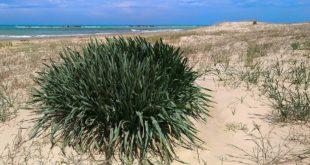 Dune di Ortona, nasce il gruppo #DunebeneComune per dire no alle concessioni alla spiaggia di Stazione di Tollo