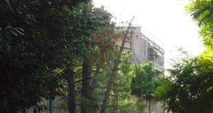 """Pianella il consigliere Filippone avverte """"pino marittimo a rischio crollo, nel parcheggio"""""""