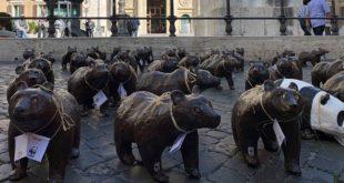 """50 orsetti """"di cartapesta"""" davanti alla Camera dei deputati. Il WWF invoca una legge speciale e interventi straordinari pr l'orso marsicano"""