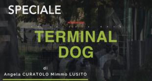 """Montesilvano. Progetto Terminal Bus a spese del Dog Village. Bettoschi: """"Sindaco perché?""""- VIDEO"""