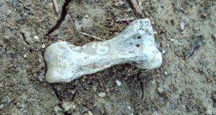 """Montesilvano, ossa riemerse al cimitero: Cilli a Di Costanzo """"non creiamo inutili allarmismi"""""""