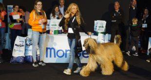 QuattroZampexpo: un weekend dedicato agli amanti degli animali