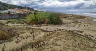 """Mareggiate – Dune Bene Comune """"niente o pochi danni con dune e vegetazione costiera"""""""