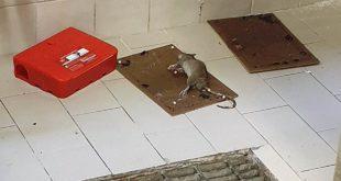"""Denuncia shock del consigliere regionale Smargiassi (M5S) """"Al San Pio topi e scarafaggi nei locali della cucina"""""""