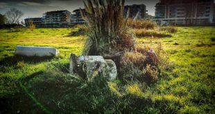 """En Arché, Di Costanzo (PD) """"l'opera di Summa giace in abbandono in un campo a Montesilvano"""""""