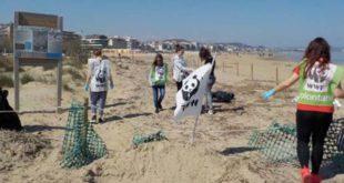 Sabato 29 febbraio col WWF per la pulizia a mano della spiaggia del Fratino