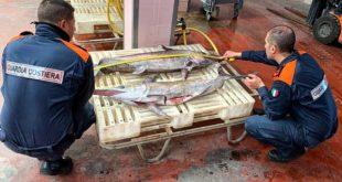 Dalla Guardia costiera a Giulianova maxi sanzioni per pesca di specie ittiche tutelate