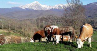 Coronavirus, la filiera del latte e del fresco in sofferenza