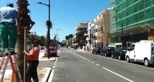 """Pescara, palme in via Pepe: Le associazioni """"ecco le azioni che andavano evitate"""""""