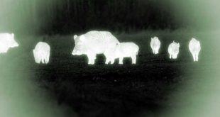 """Deregulation venatoria in Abruzzo: il WWF """"si vuole far sparare di notte e usando mezzi non consentiti"""""""