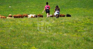 AGRICOLTURA: IMPRUDENTE, 1,8 MILIONI PER LA FILIERA LATTIERO CASEARIA