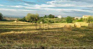 """""""Rilancio e sviluppo post covid 19 per le aree rurali"""", venerdi 19 giugno un web meeting"""