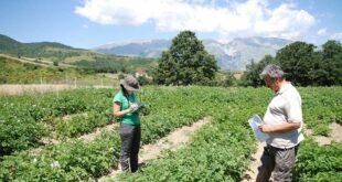 Parco Majella, nell'anagrafe biodiversità la Patata Sessanta dei Monti Pizzi