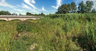 Alveo del torrente Piomba: dalla Regione 180mila euro per la pulizia