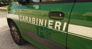 Fauna in difficoltà: consigli per il soccorso dai Carabinieri Forestali e WWF