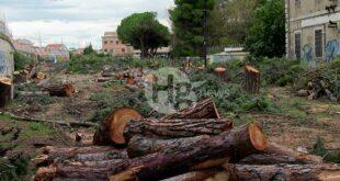 Alberi abbattuti, lettera aperta di Italia Nostra a sindaci e istituzioni