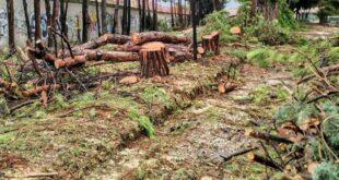 """Taglio alberi 'ex FEA': il WWF «Distruttivi i lavori di """"riqualificazione""""»"""