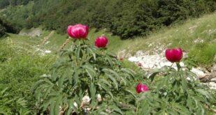 La Flora del Parco Nazionale della Majella, uno strumento di tutela della biodiversità