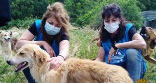 Città Sant'Angelo, accordo tra il comune e il Movimento animalisti Abruzzo