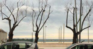 """Gli ecologisti sulle potature """"a Pescara si taglia talmente tanta chioma che gli alberi spesso si seccano"""""""