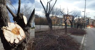 "Riviera sud a Pescara: Le associazioni ecologiste ""potature errate"""