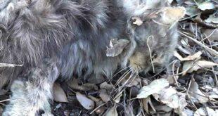 Vile gesto a Pescara: ignoti uccidono 6 gatti di colonia in via Colle innamorati