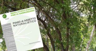 Pescara, Associazioni e opposizione a difesa degli alberi di Via Pantini