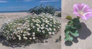A Pescara la biodiversità riconquista una città: a sorpresa due tra le piante più rare d'Abruzzo