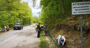Montate barriere mobili sulla provinciale 164 per salvare le salamandre