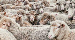 Da Pettinari (M5S) una risoluzione per eliminare gli allevamenti intensivi in Abruzzo