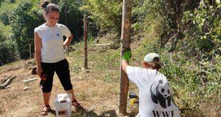 Il WWF cerca volontari per aiutare l'Orso bruno marsicano